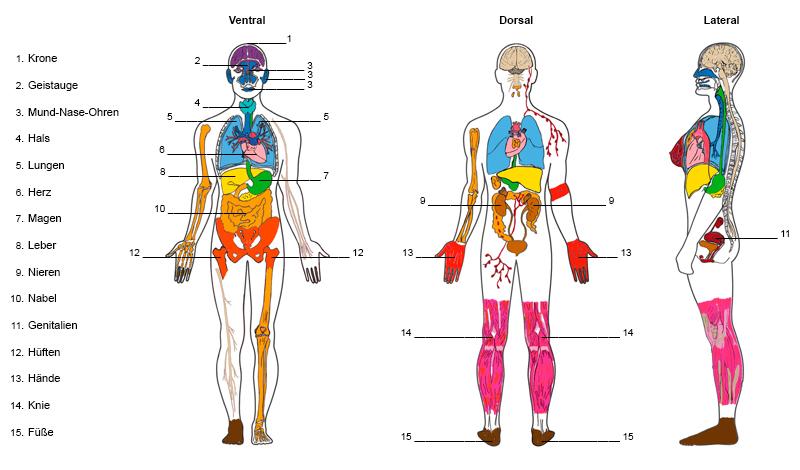 Farblichtglas-Therapie nach David Wared